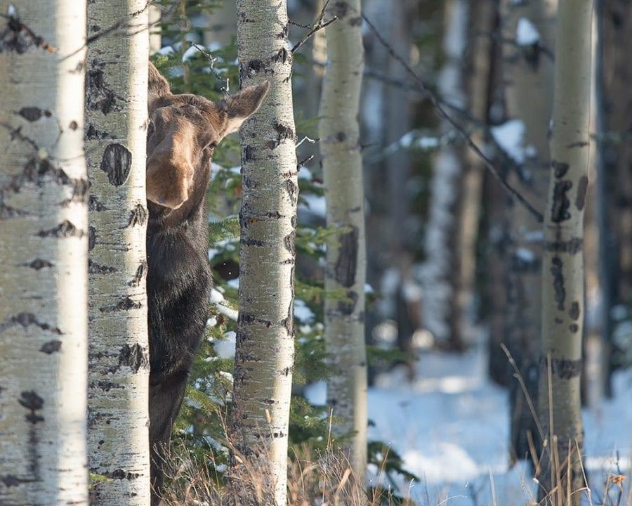 41 финалист конкурса смешной фотографии дикой природы