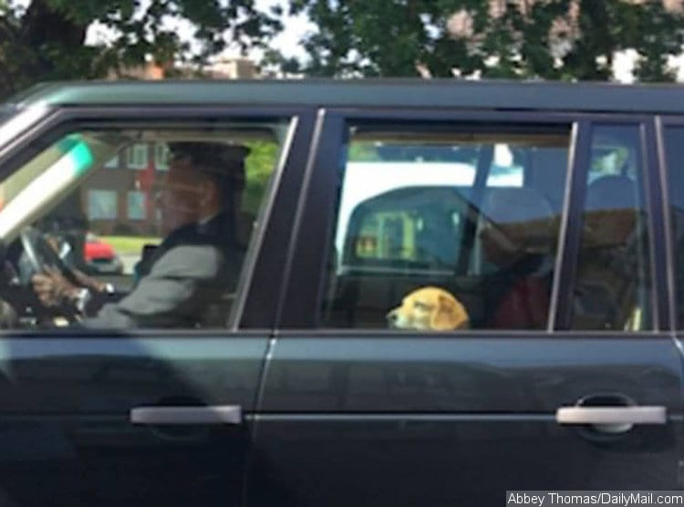 История про то, как пес с улицы попал в королевский дворец