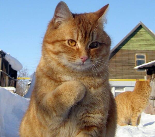 22 наглядных подтверждения, что коты - разумные существа!