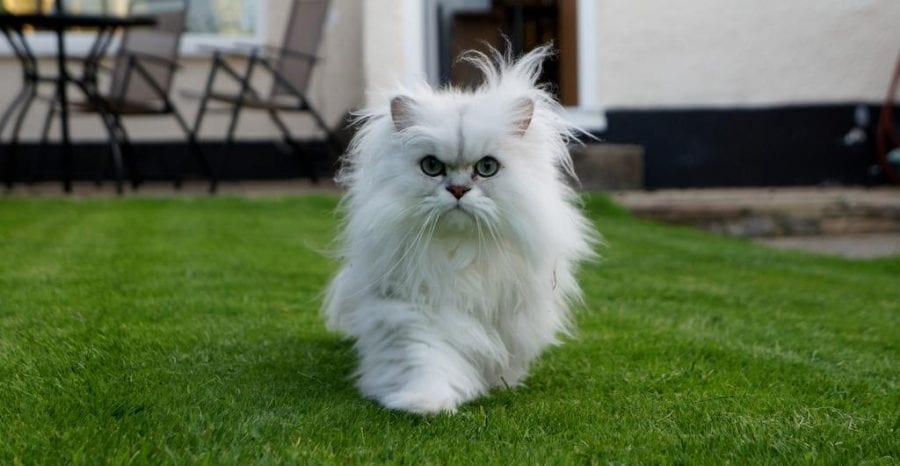Как из-за кошки в доме появились мыши