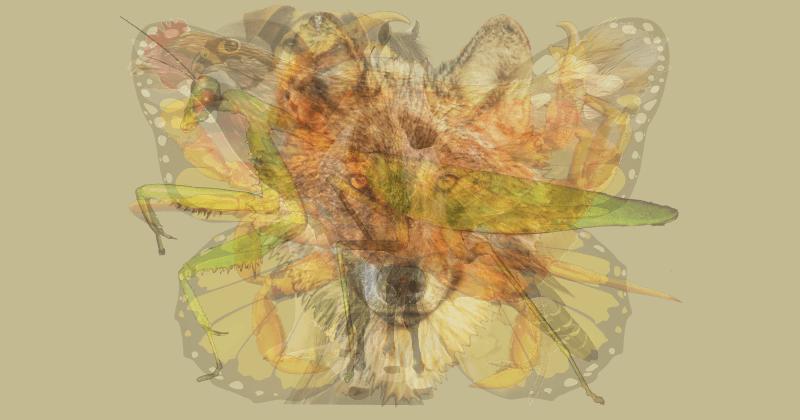 ТЕСТ: Первое животное, которое вы увидите, определяет вашу личность