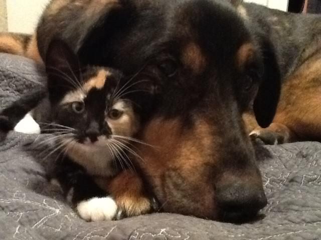 Кот горевал из-за смерти друга-пса, и хозяева придумали, как ему помочь