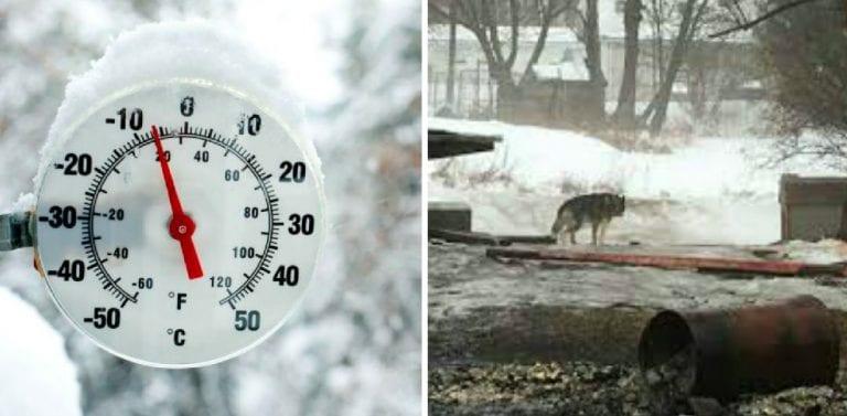 Собака сидела на цепи на улице более 10 лет, и только случайность изменила ее жизнь