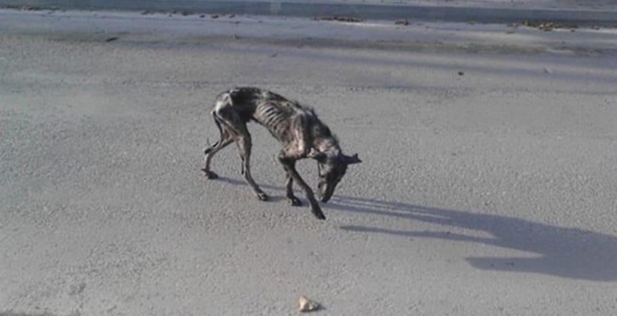 Женщина увидела фото несчастного пса и решила найти его, чтобы спасти