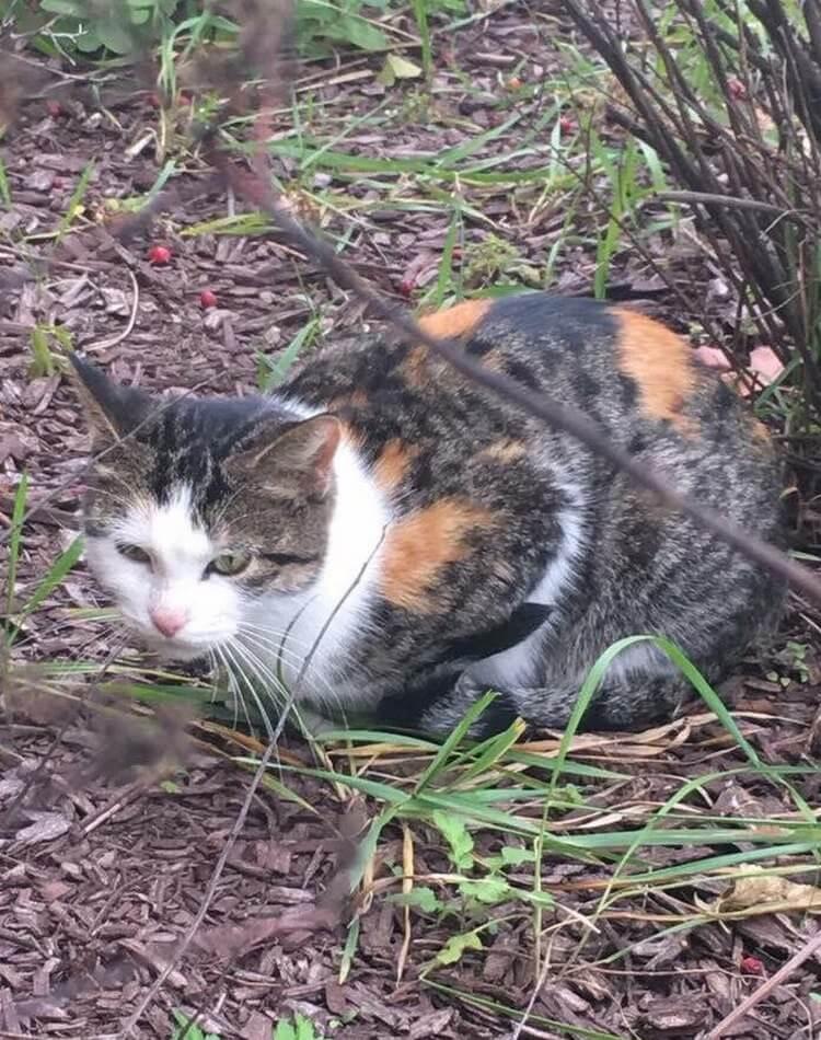 Котята попали в беду, и бездомная мама-кошка пошла за помощью к людям