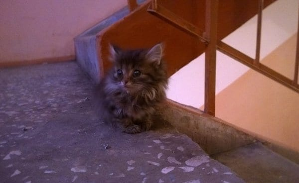 Подвальный котенок сам выбрал себе дом и стал Маркизом