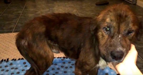 Больного щенка спасли от усыпления в последнюю минуту потому, что он еще верил людей
