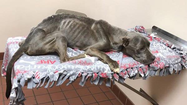 Консьерж спас собаку от жестокой квартирантки