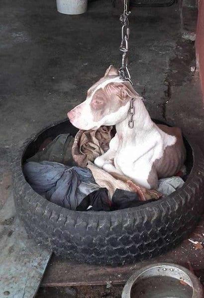 Много лет собака не могла опустить голову, но ее мучения уже позади