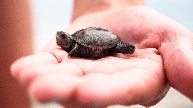 Самые маленькие животные мира - меньше вашего пальца!