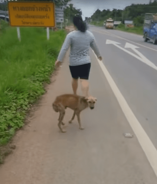 Голодный щенок подбегал к прохожим, выпрашивая еду, но все проходили мимо