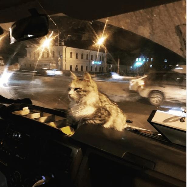 Замерзшая кошка запрыгнула в маршрутку. Водитель поступил как Человек.