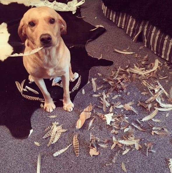 20 фото собак, которые тут ни при чём