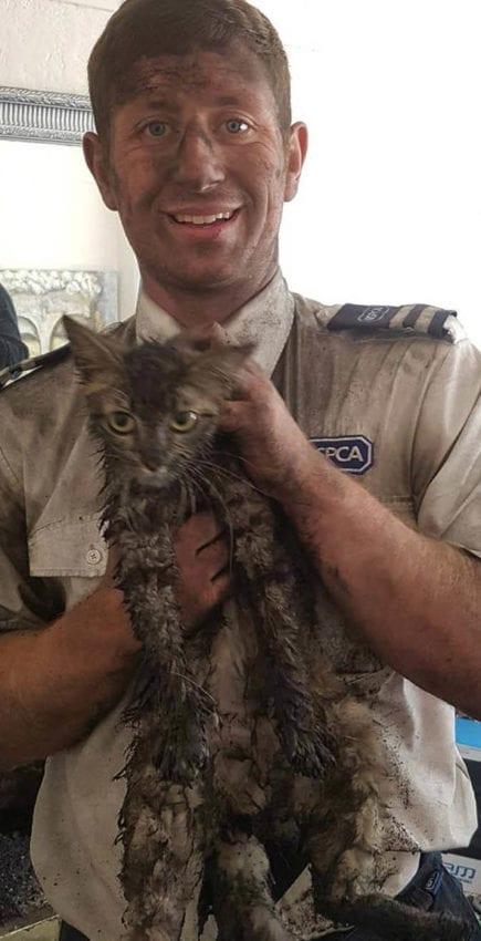 Чтобы вытащить застрявшую в дымоходе кошку, пришлось проявить смекалку