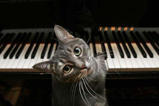 ВИДЕО: Выступление самой известной кошки-музыканта с оркестром