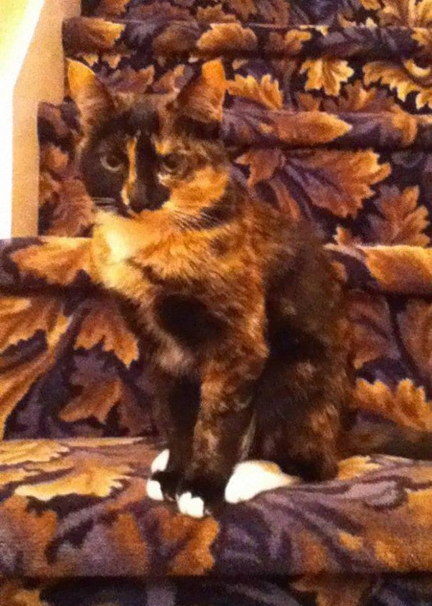 30 котов, в совершенстве овладевших искусством камуфляжа