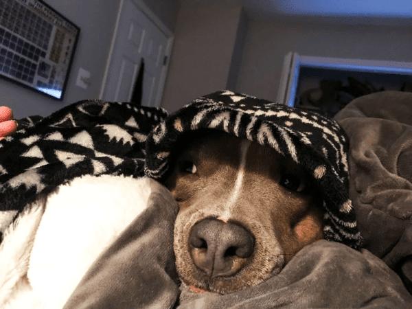 Парень взял из приюта собаку, которая оказалась большой оригиналкой