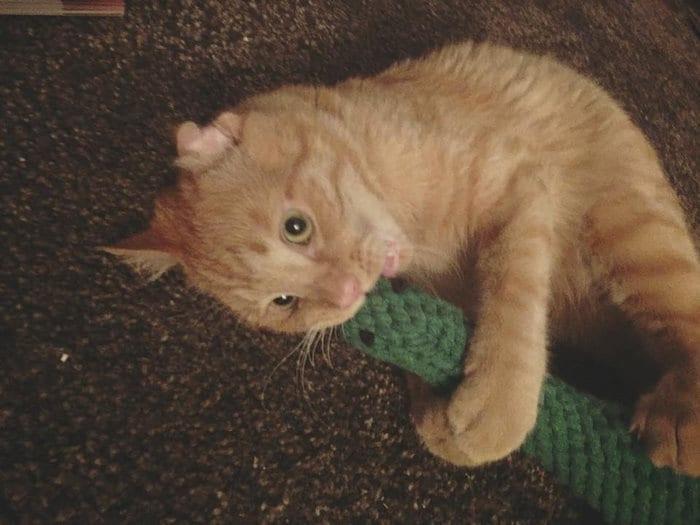 Пара забрала из приюта самого грустного кота, и уже через час его было не узнать