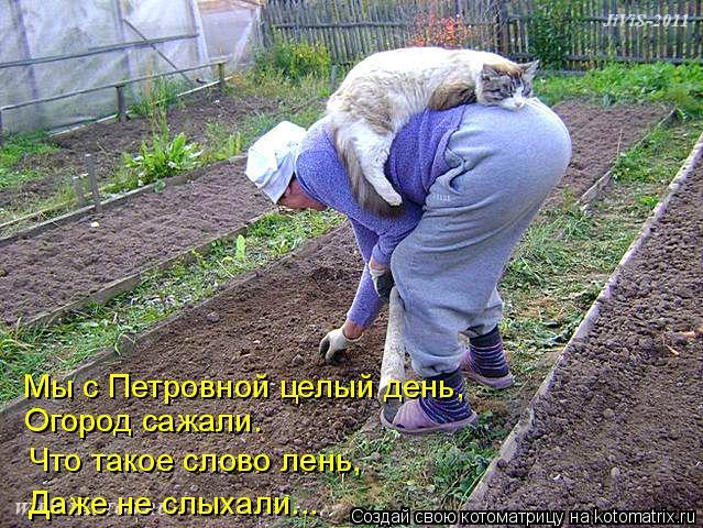 20 фото котов-дачников