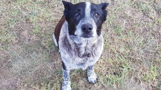 Старая глухая собака почти сутки оберегала потерявшуюся 3-хлетнюю девочку