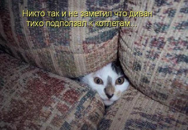 18 котов с преступными наклонностями