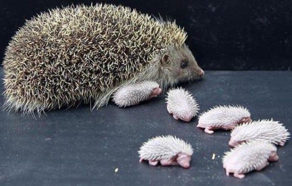 40+ умилительных фото детенышей животных