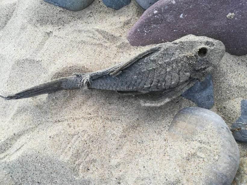 Непонятные и странные вещи, найденные отдыхающими на курортных пляжах