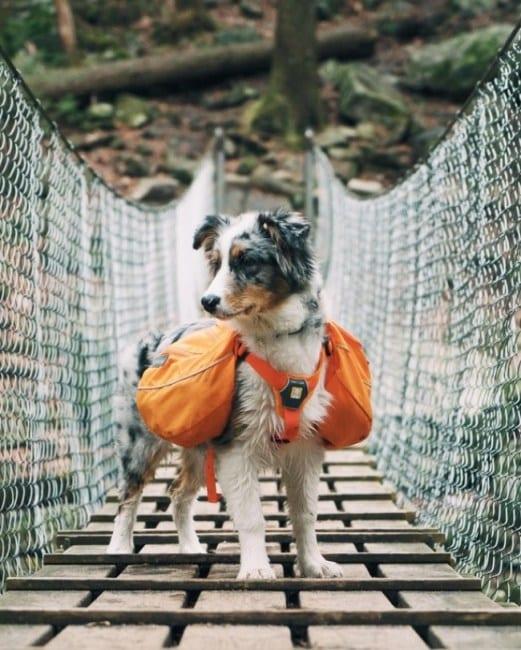 25 псов, которые очень хотели, чтобы их назвали «Хороший мальчик»