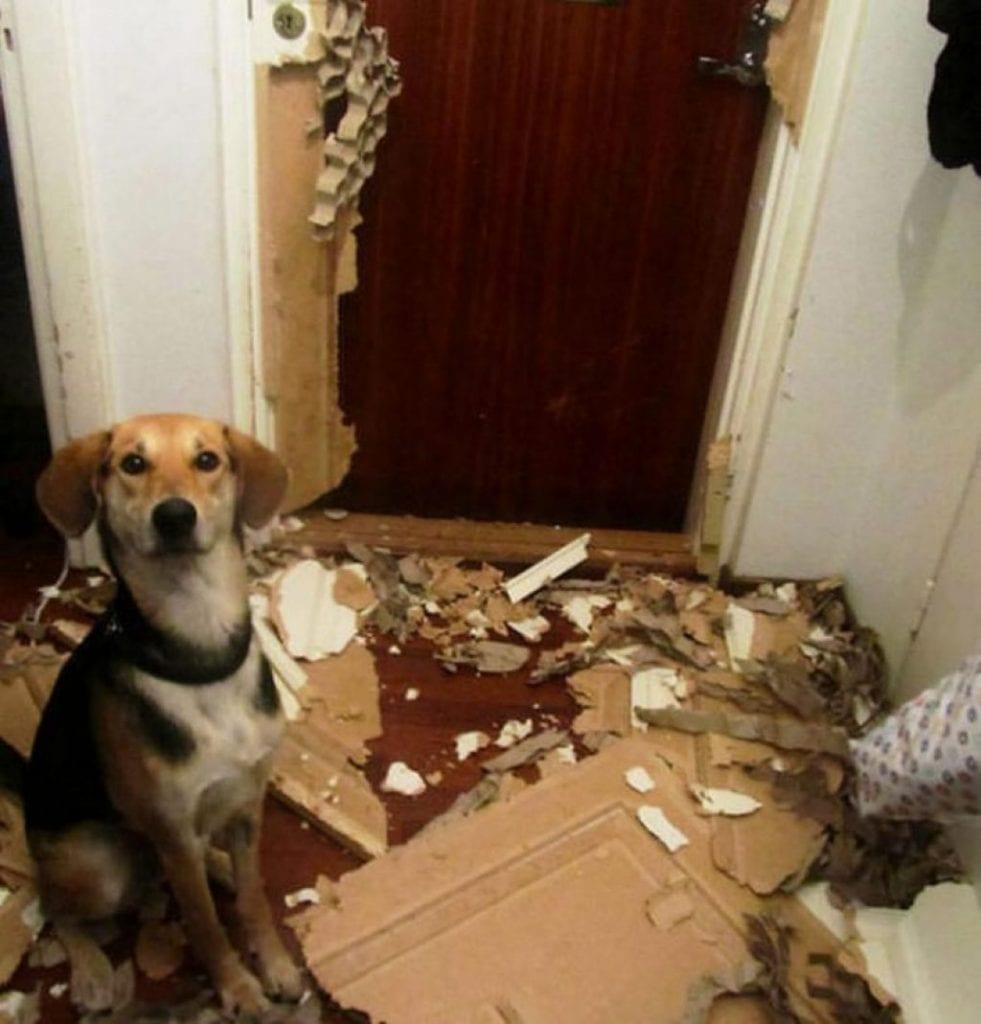 26 собак, которые просто хотели сделать мир лучше