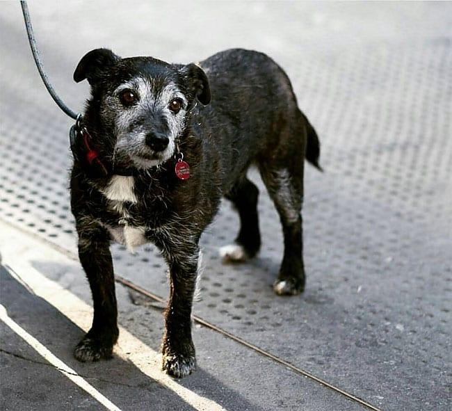 20 фото грустных собак, которых не взяли в магазин