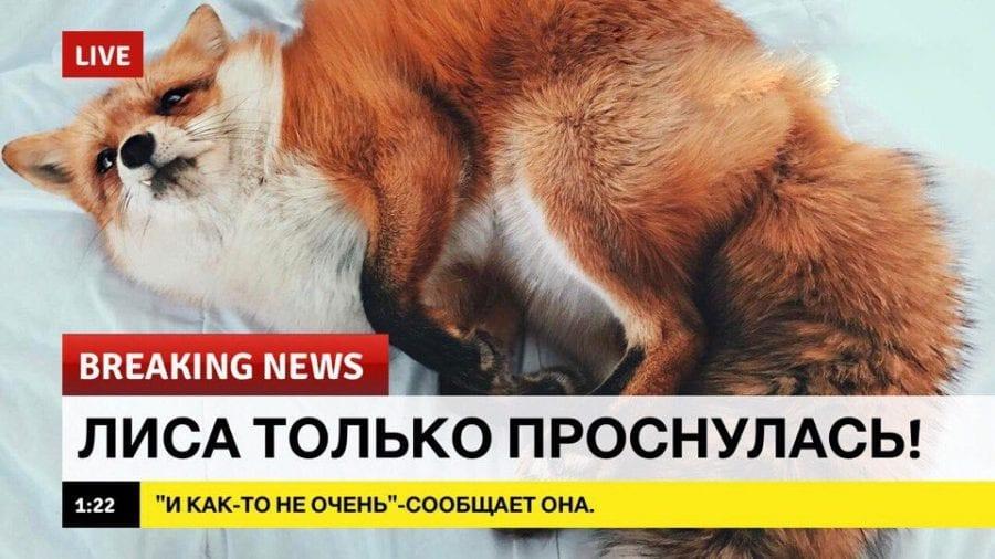 16 ФОТО: Хорошие новости о потешных питомцах