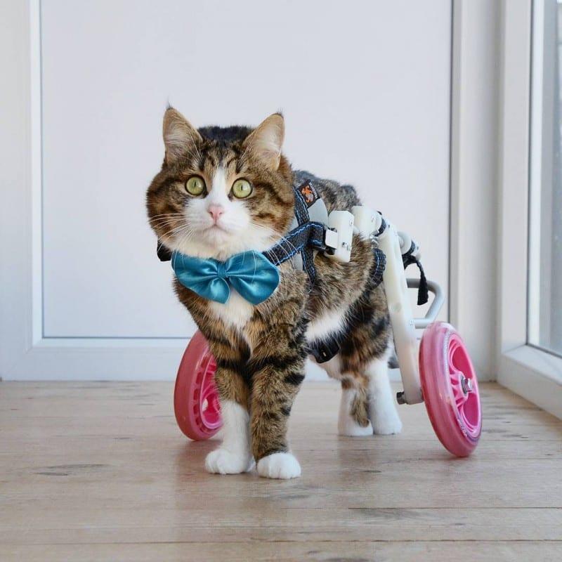 Мегапозитивный кот-инвaлид зарабатывает на ипотеку