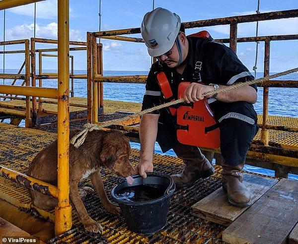 Работники буровой платформы в море спасли собаку в 217 км от берега!