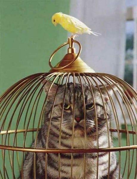 20 фото о непростых взаимоотношениях котов и попугаев