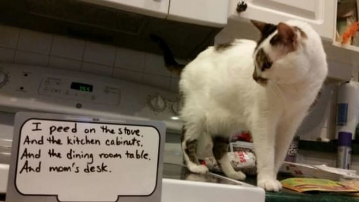15 фото котов с перечислением их грехов (18+)