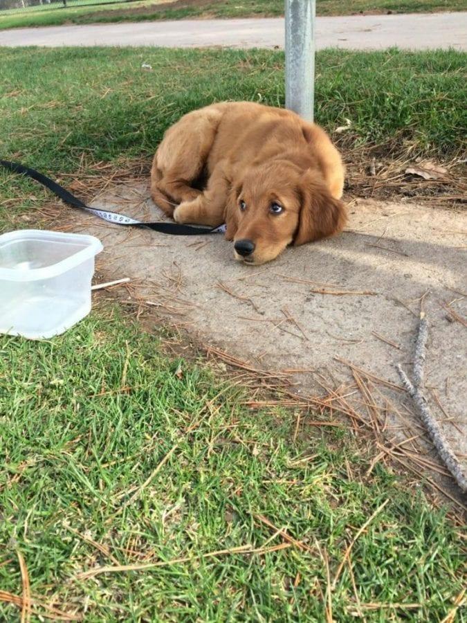 30 животных, пожалевших о том, что вышли из дома