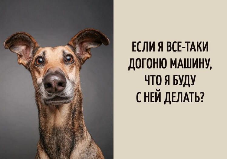 15 мыслей собак, прочитанных экстрасенсом