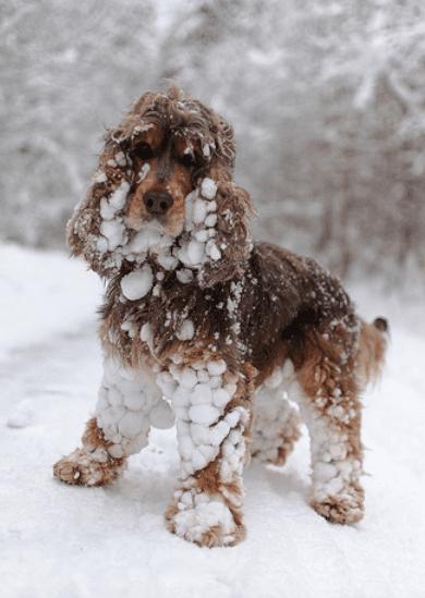 30 фото животных, впервые увидевших снег