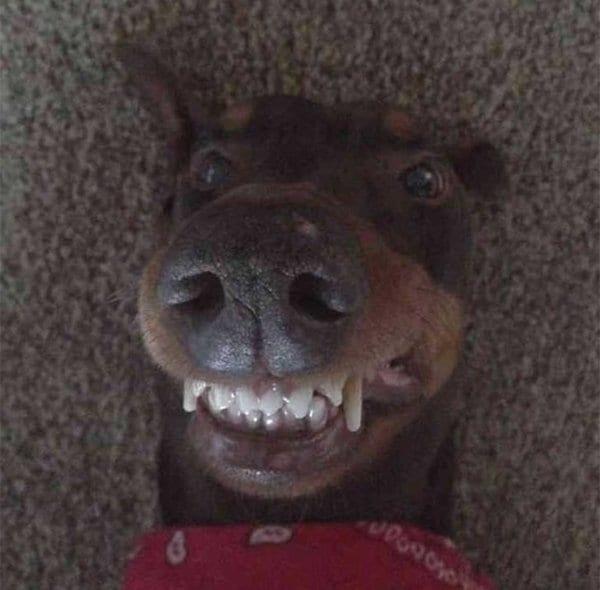 18 забавных фотоисторий из жизни собак. Выпуск 3.