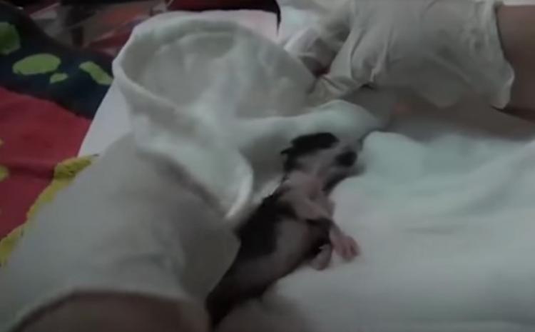Беременная кошка обратилась в больницу, когда поняла, что не сможет родить сама
