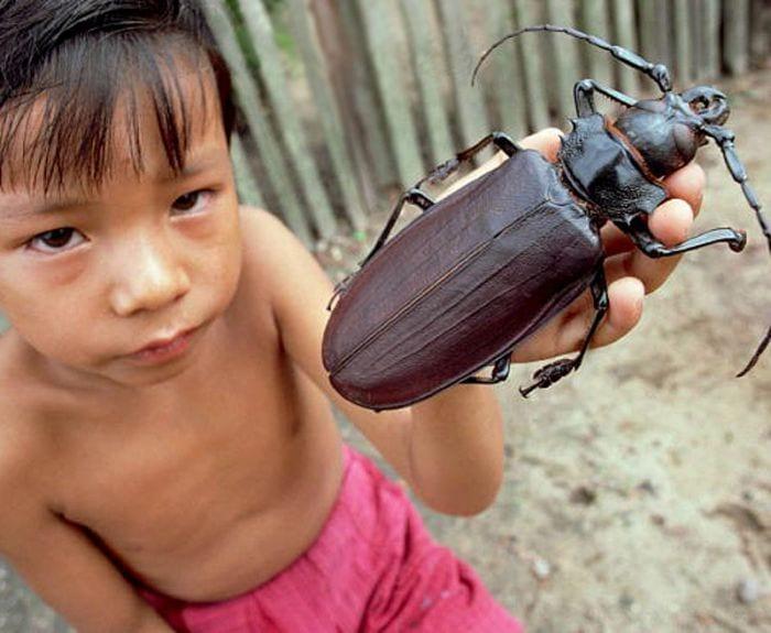 Непостижимая Азия: 30+ фото, недоступных нашему пониманию