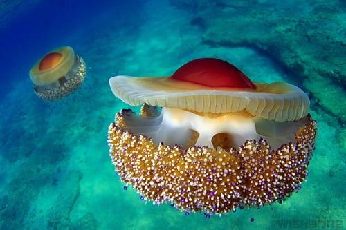 Пара обнаружила в море огромную «яичницу глазунью»