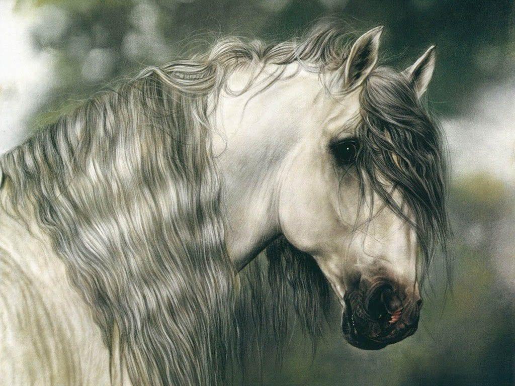 Минутка восхищения красотой лошадей (17 ФОТО)