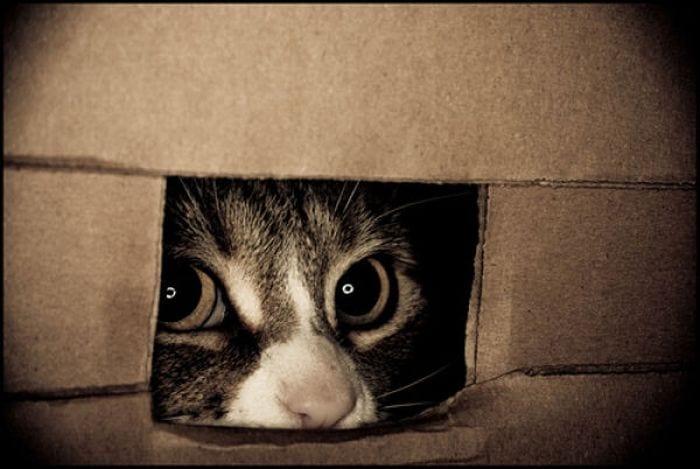 33 фото настоящих котов-шпионов