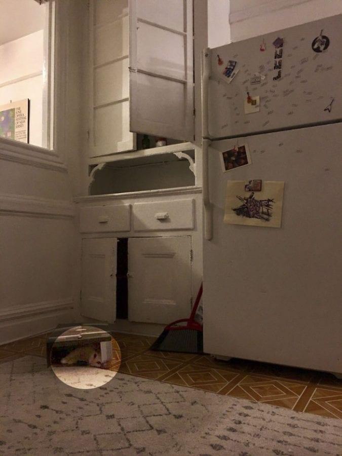 Увлекательная игра: Найдите кошку-невидимку на 19 фото