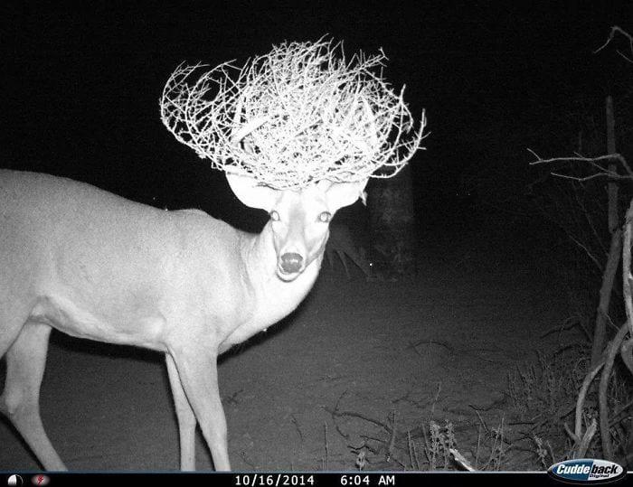 30 неординарных фото животных, сделанных фотоловушками