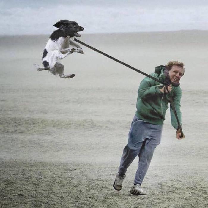 24 фото огалтелых собачников и их питомцев