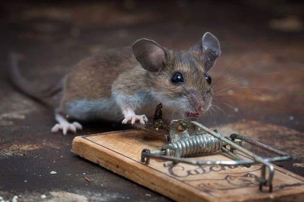 "Фоторепортаж ""Мышка, сыр и мышеловка"""