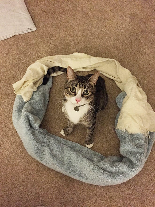 24 фото о том, что коты в коробках уже не в тренде