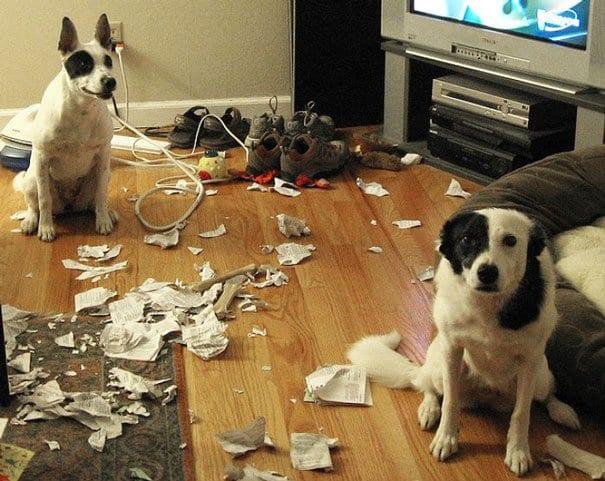 17 фото собак, которые развлекались, как могли